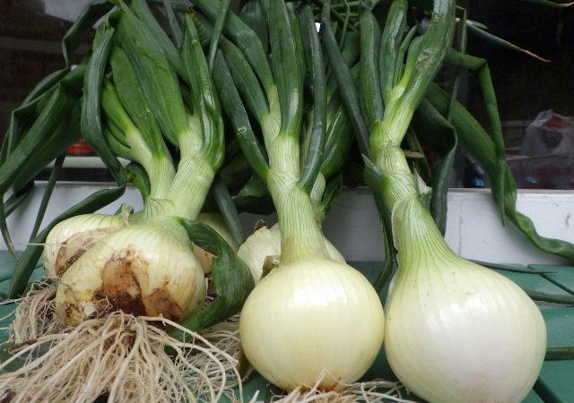 egg農園 糸島支部 -第2回目の肥料-